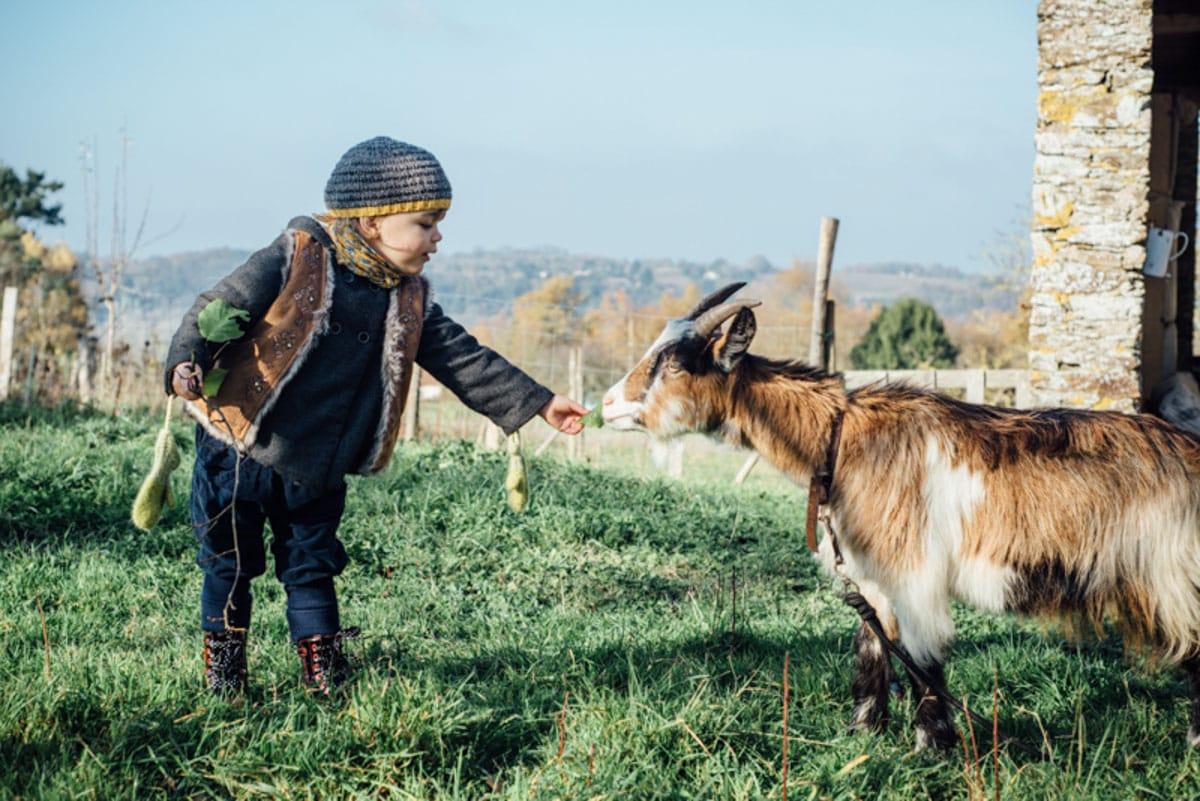 une enfant donne à manger à une chèvre dans un jardin à Oudon