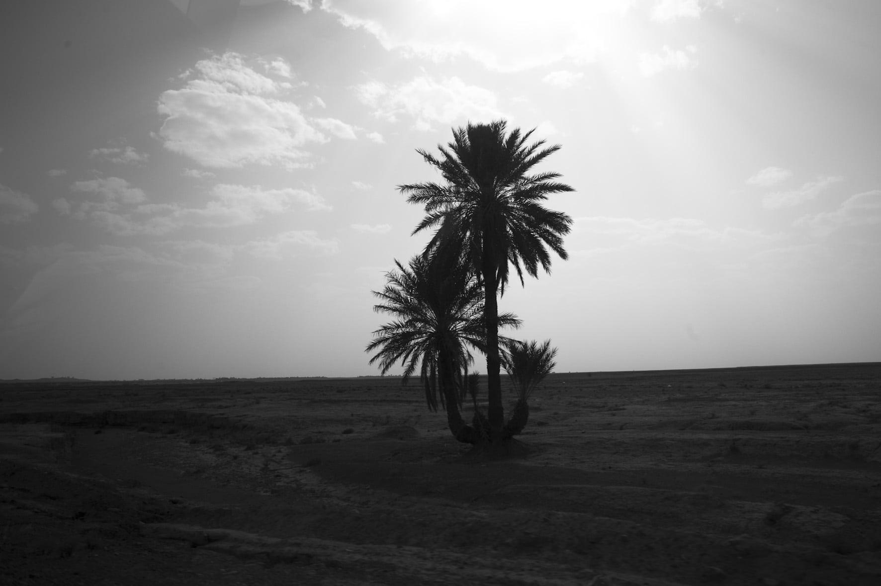 Palmier dans le désert lors d'un voyage d'EVJF à marrakech